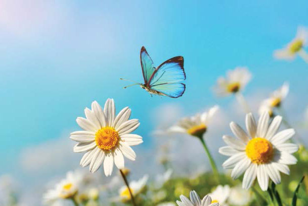 butterfly flying next to flowers